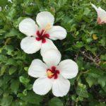 WEB-Fleurs