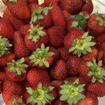 Web-fraises
